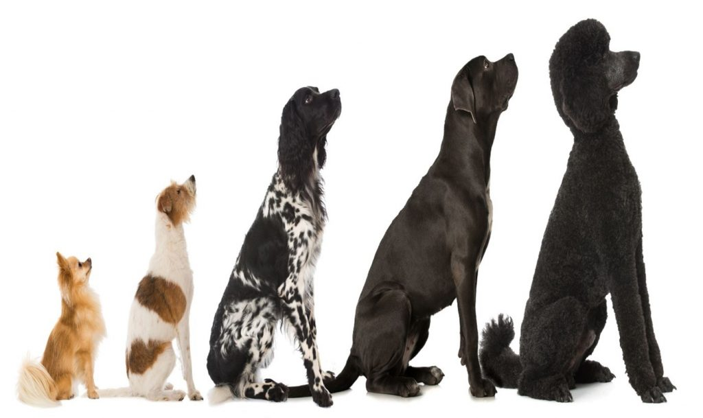 Dog Breed Guide – FAQ on Small and Large Breed Nutrition