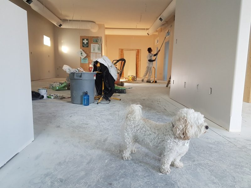 7 Reasons To Hire Professional Painters