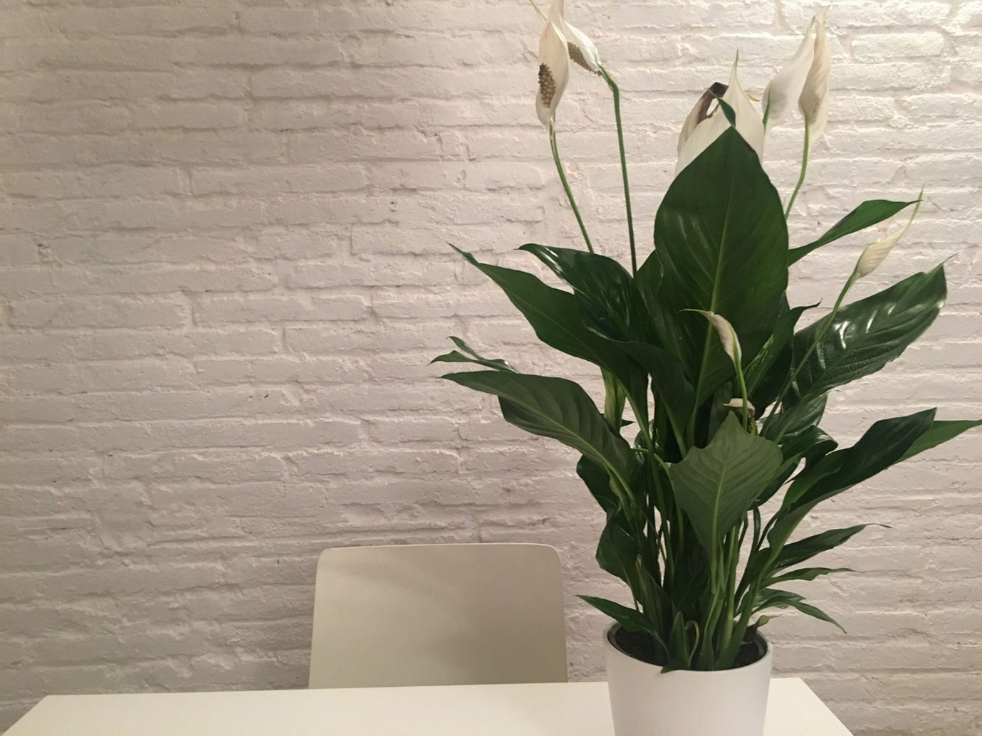 Plant Delivery and Tips for Keeping Healthy Indoor Plants